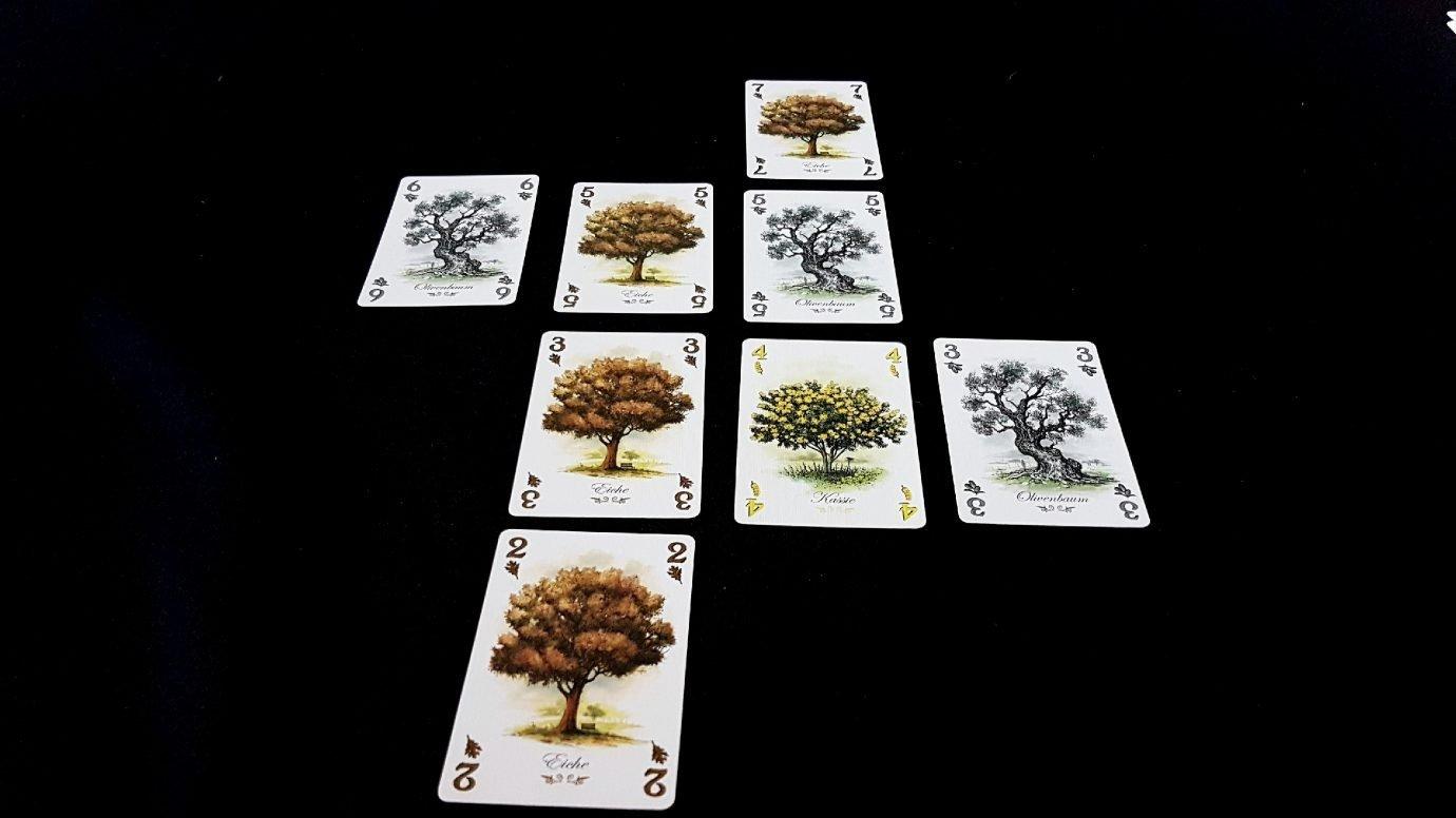 A growing arboretum