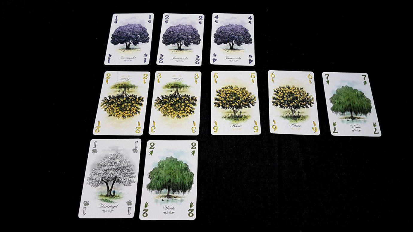 An arboretum
