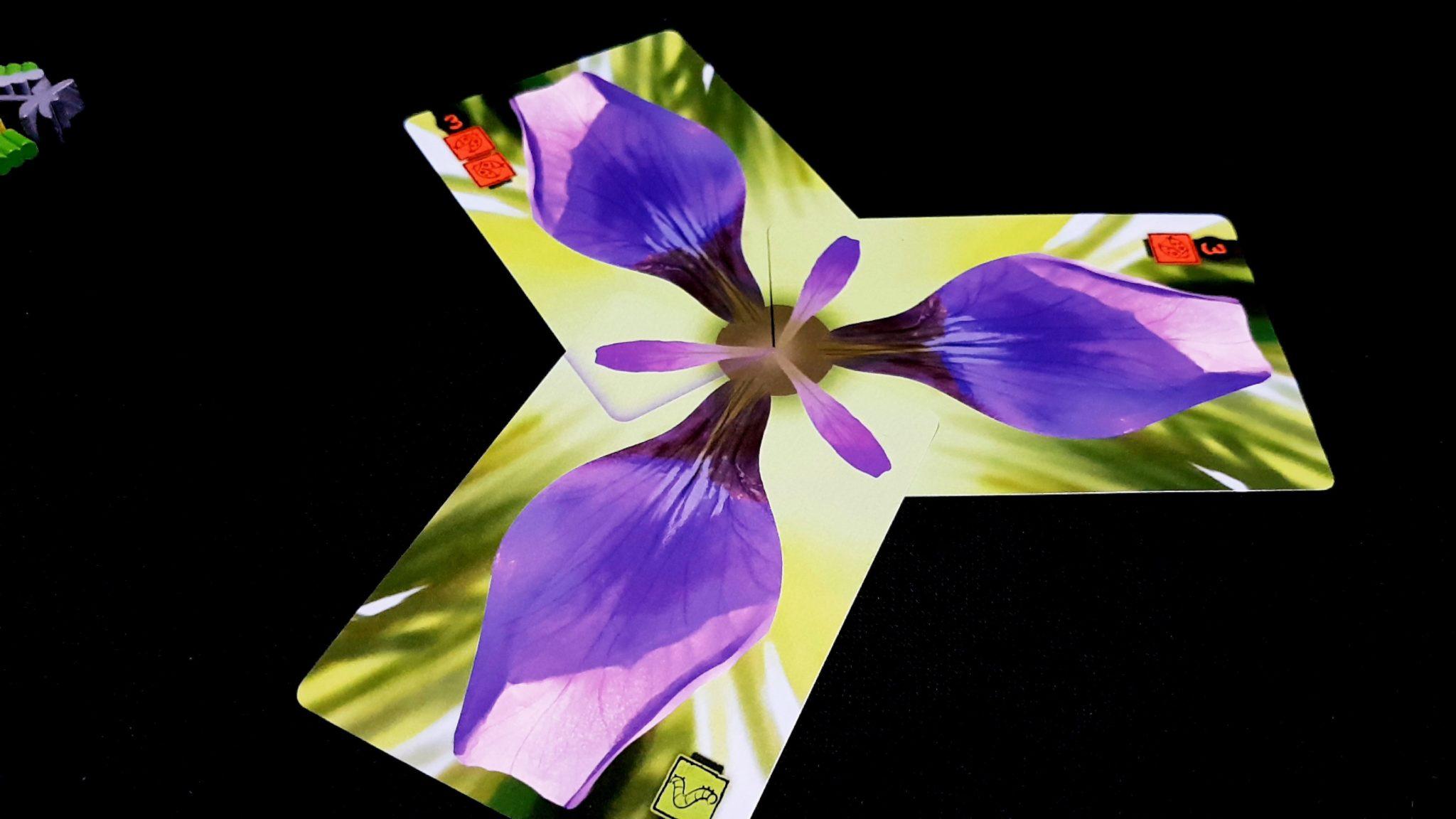 Flowers in Lotus