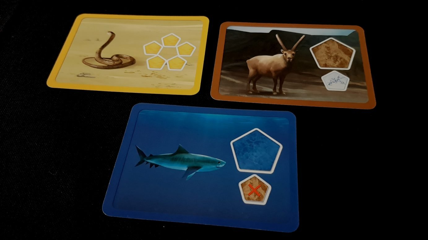 Close up on cards in Planet