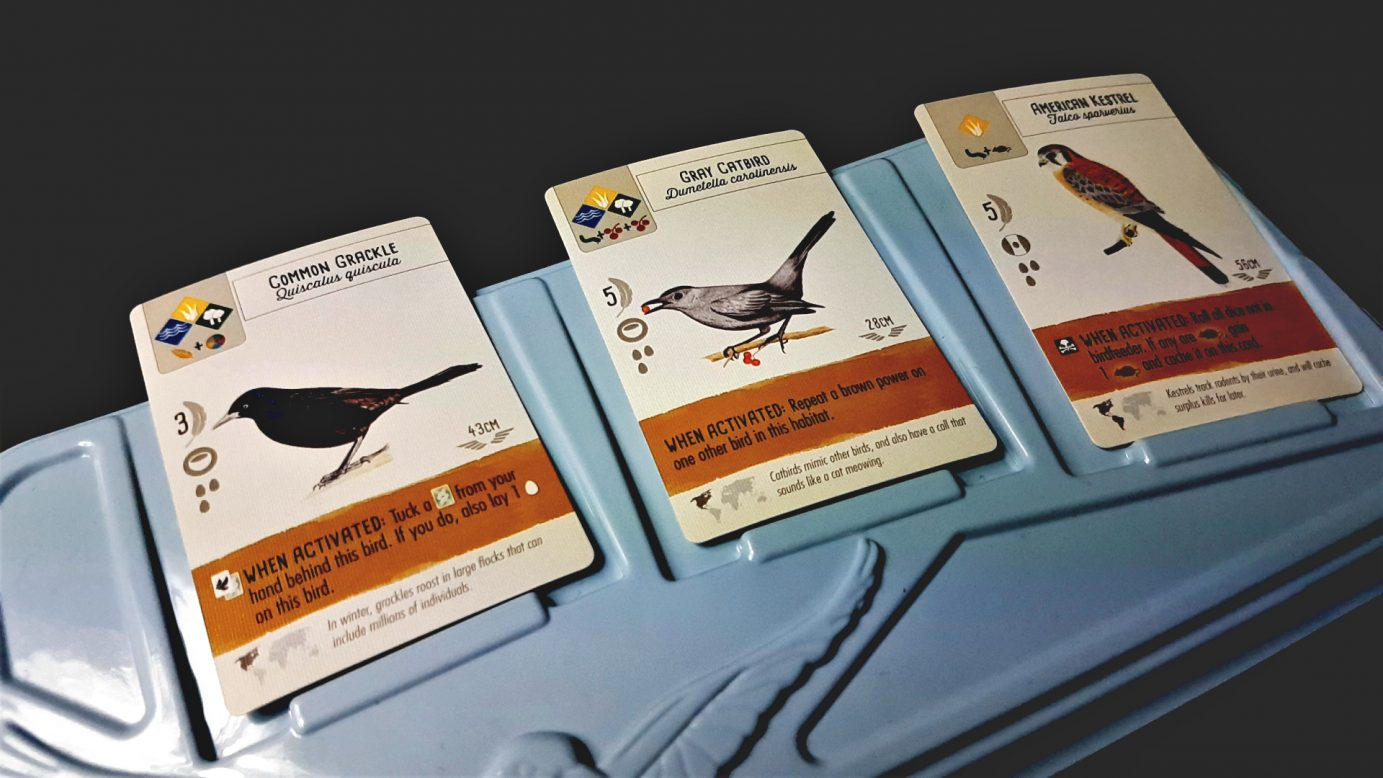 Cards in Wingspan